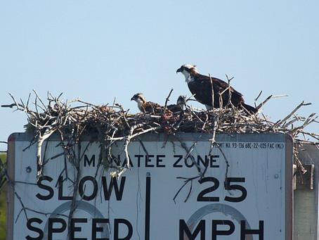 Nesting season is here!!