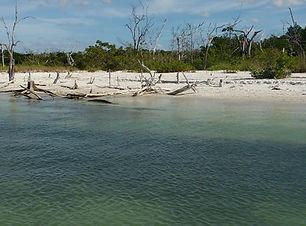 Fort Myers Beach wildlife cruise