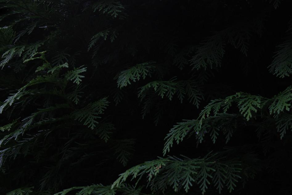 green tree leaves copy.jpg