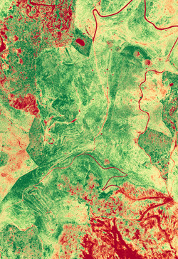 NDVI vegetation density survey