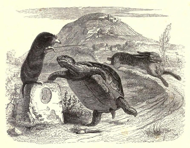 The tortoise beats the hare