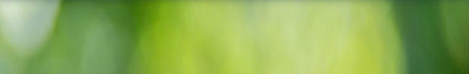 green banner l.jpg