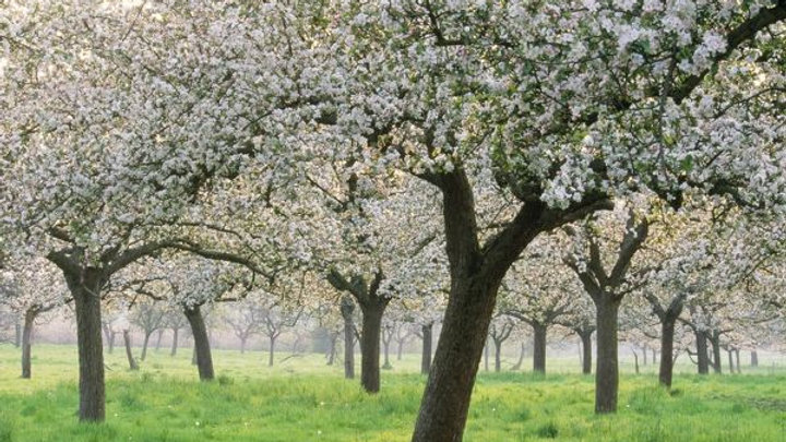 1. Apple Blossom Magical Flower Guardians Meditation