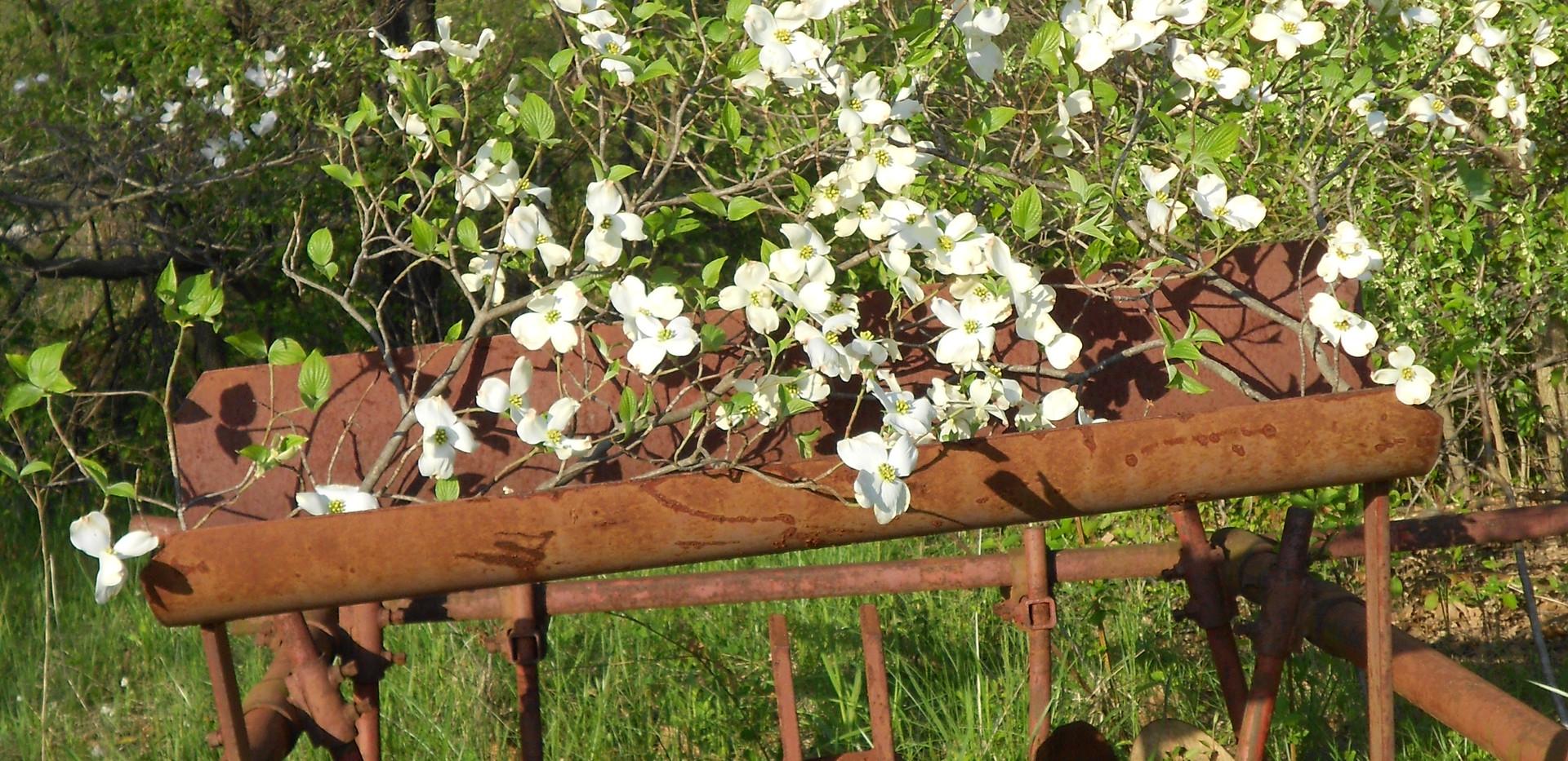 spring2015 163.JPG