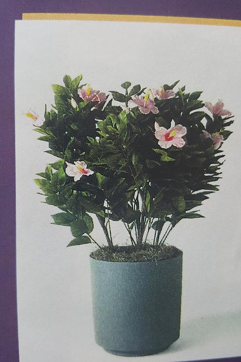 Azelia summer plant
