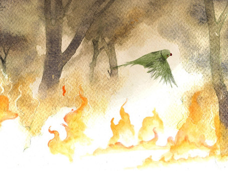 The bird in the forest - A Jataka Tale from India