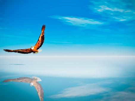 The Story of the Phoenix – from Greek mythology