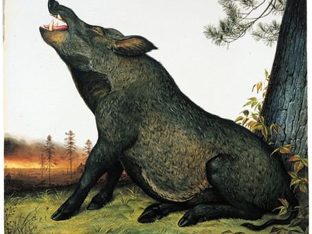 The Pig and the Peacock – Les Fables De La Fontaine, France