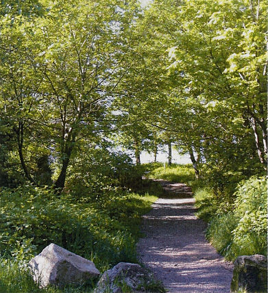 Macdonald Wood Beach Access