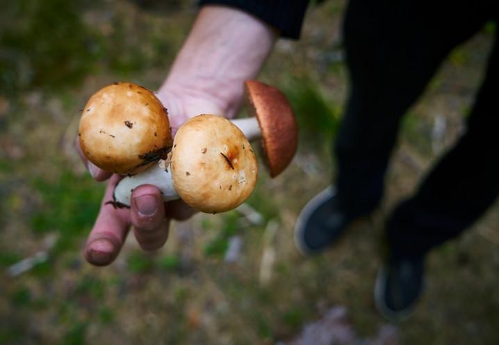 Pekka Terävän sienikeittoresepti
