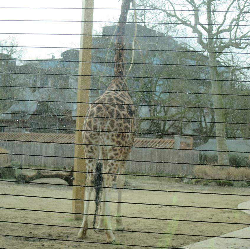 dierentuin deel 2 (2)