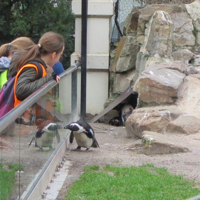 dierentuin deel 2 (61)