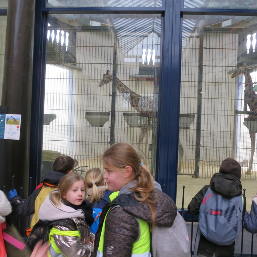 dierentuin deel 2 (64)