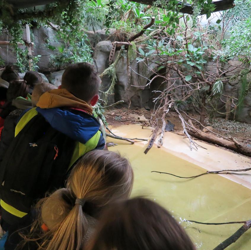 dierentuin deel 2 (16)