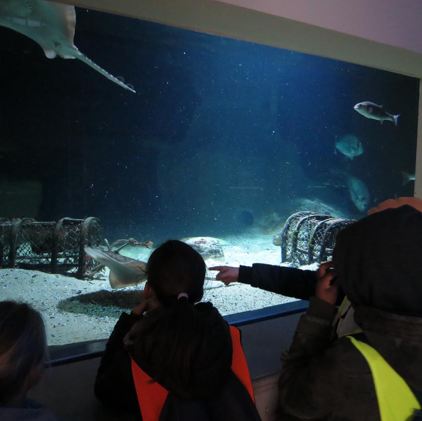 dierentuin deel 2 (7)