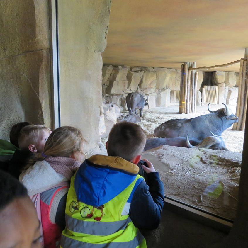 dierentuin deel 2 (1)