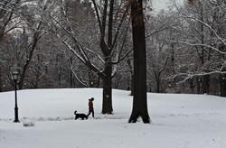 Quiet in the Snow