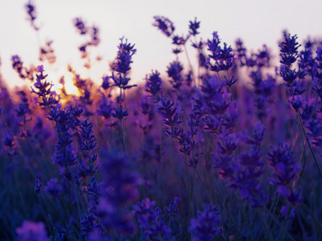 Welcome to Lavender Blue's NEW website!