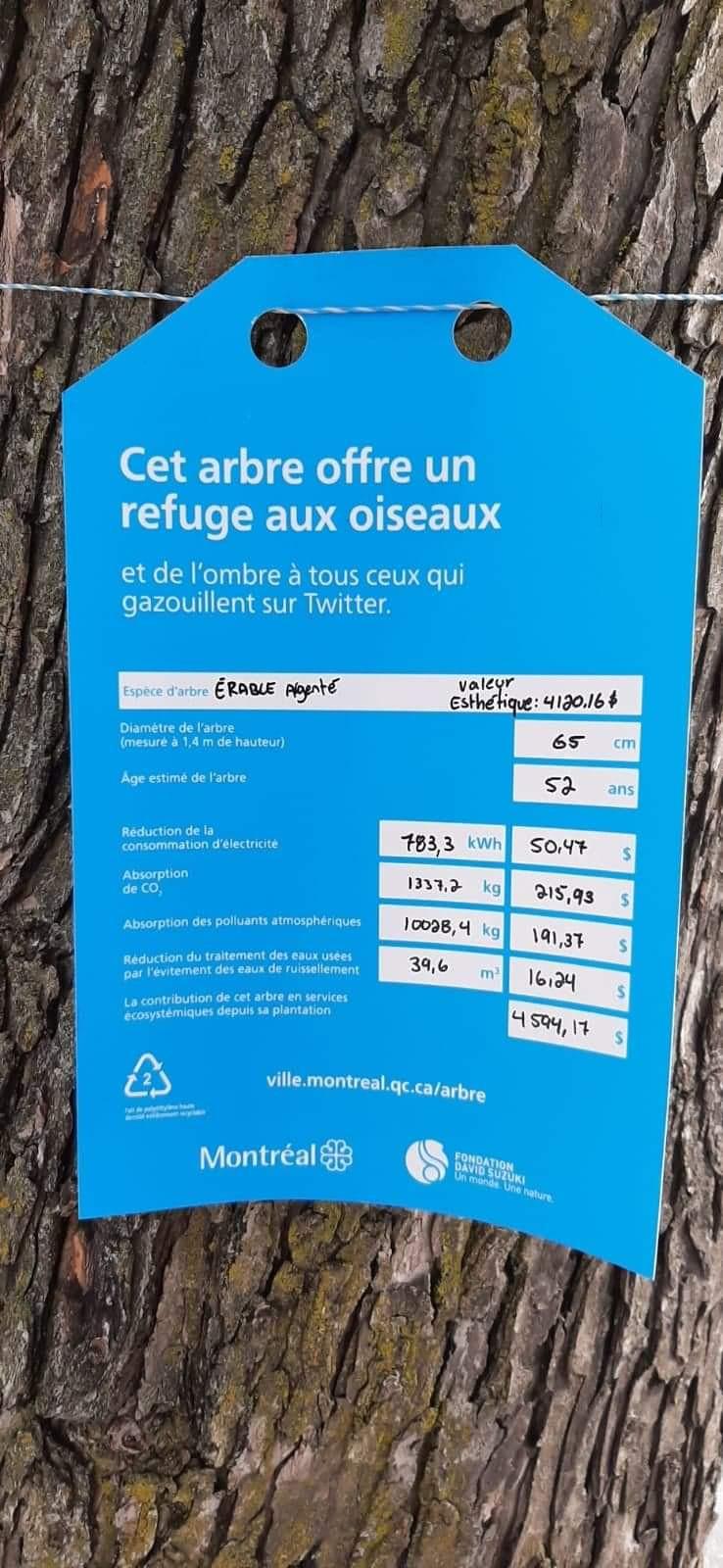 liste des bénéfices que nous apportent les arbres en ville