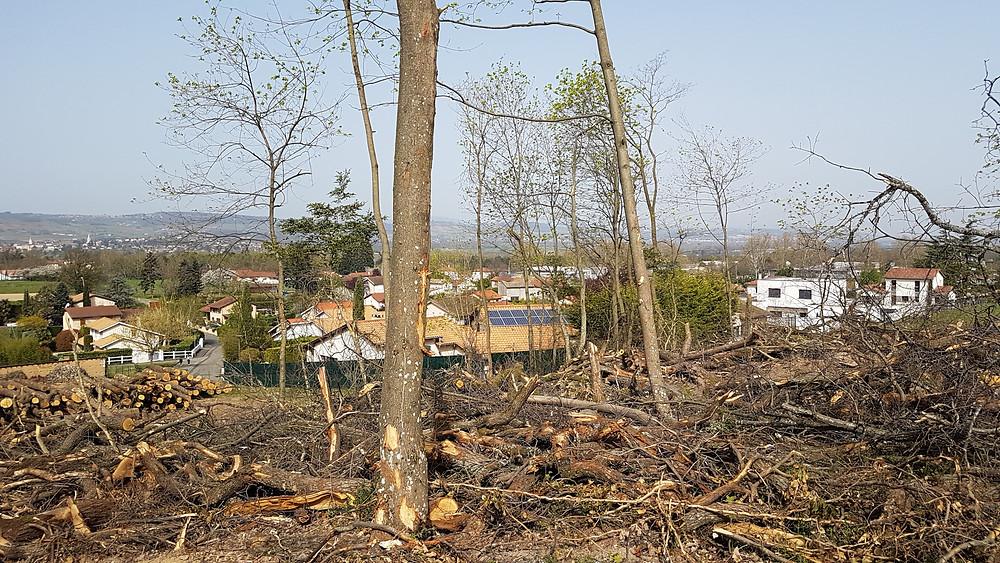 massacre de la forêt de Montavallon