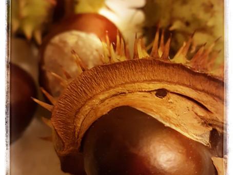 Dix raisons de ramasser des marrons en automne !
