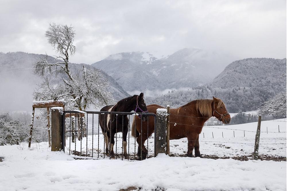 chevaux Mieusy Faucigny