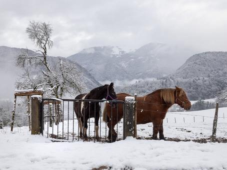 Les chevaux immobiles