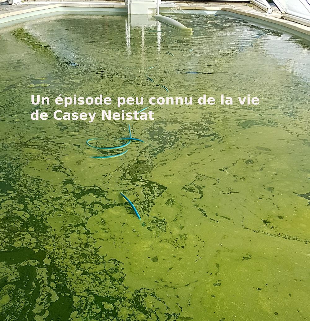 piscine menacée par les algues