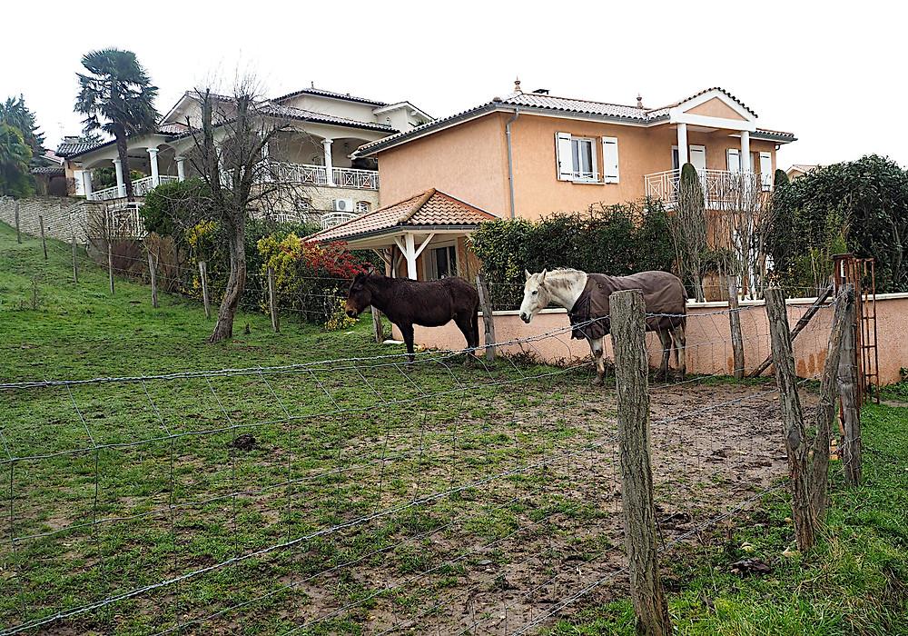 chevaux immobiles à Lissieu