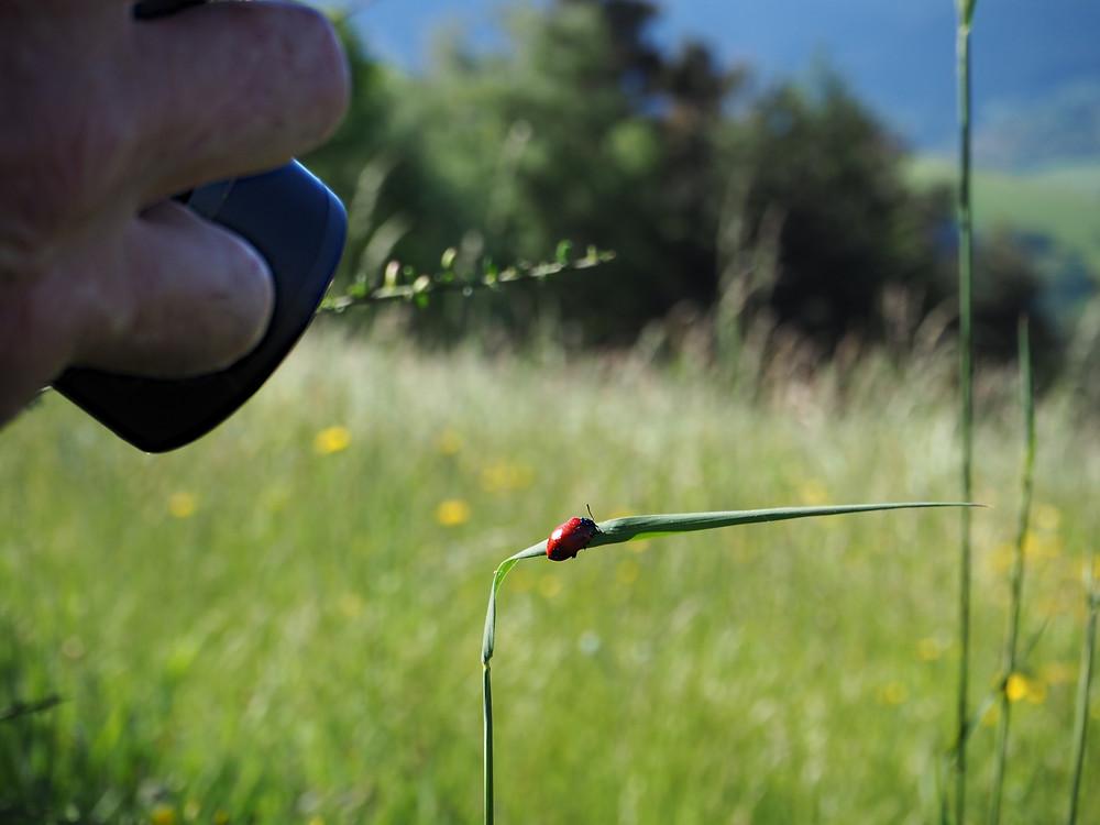 photographe visant un petit coléoptère rouge