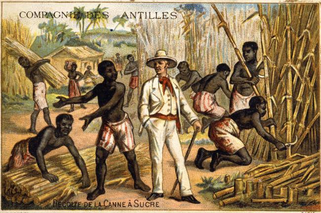 des esclaves noirs coupent la canne sous la surveillance d'un blanc