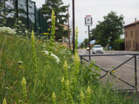 Botanique de bord de route
