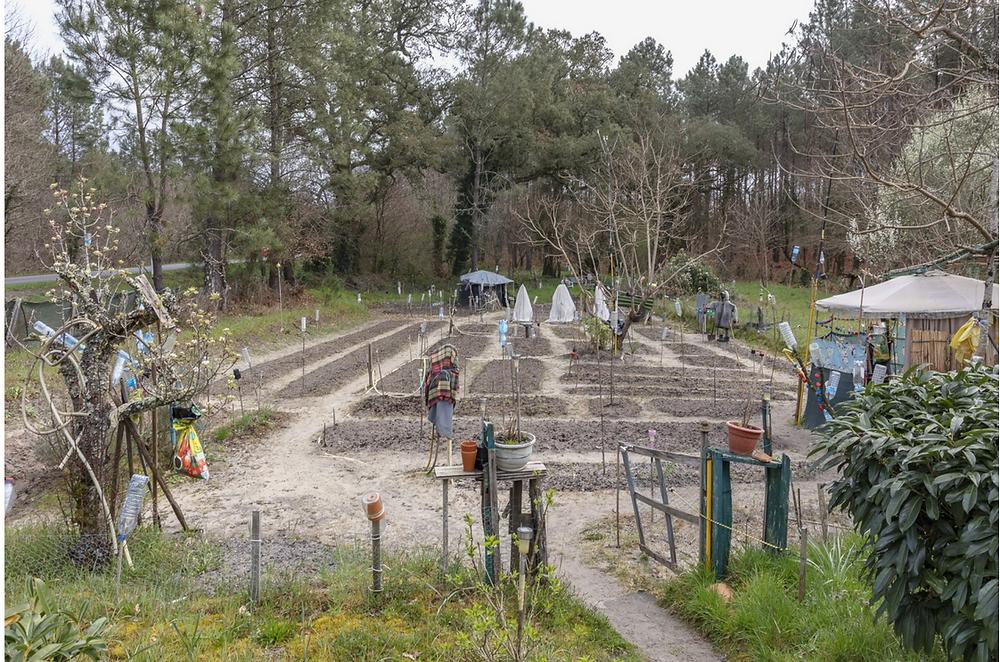 jardin potager à Castets