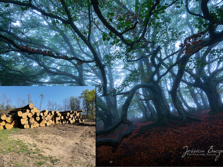 Le prix de vente des arbres coupés entre-t-il dans le calcul du préjudice écologique ?
