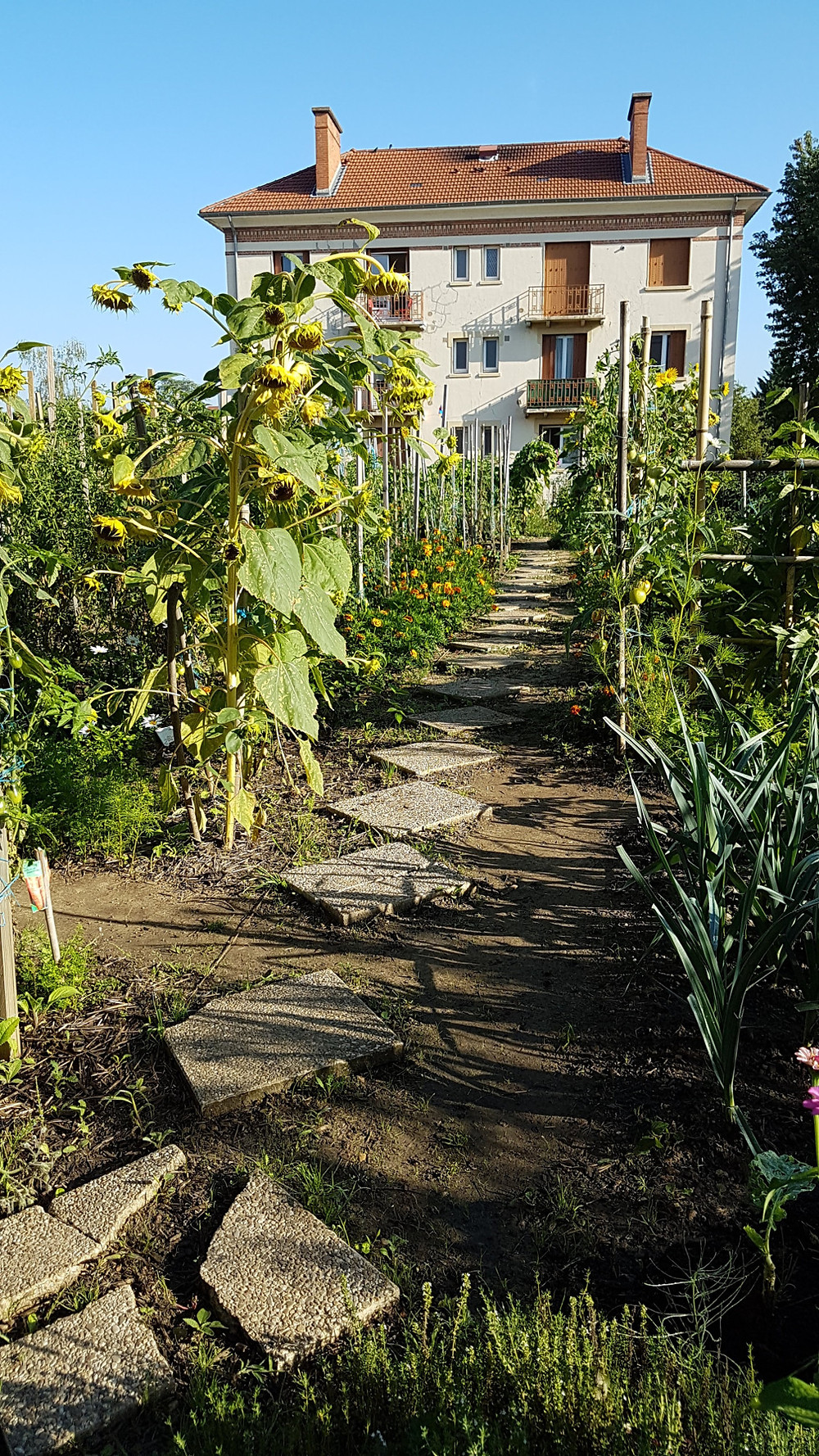 le jardin tracé au cordeau