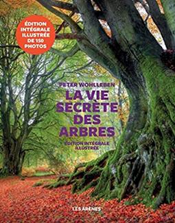 Sylvothérapie, soin de l'âme et du corps. Le petit bois de Montvallon aurait pu devenir un parc.