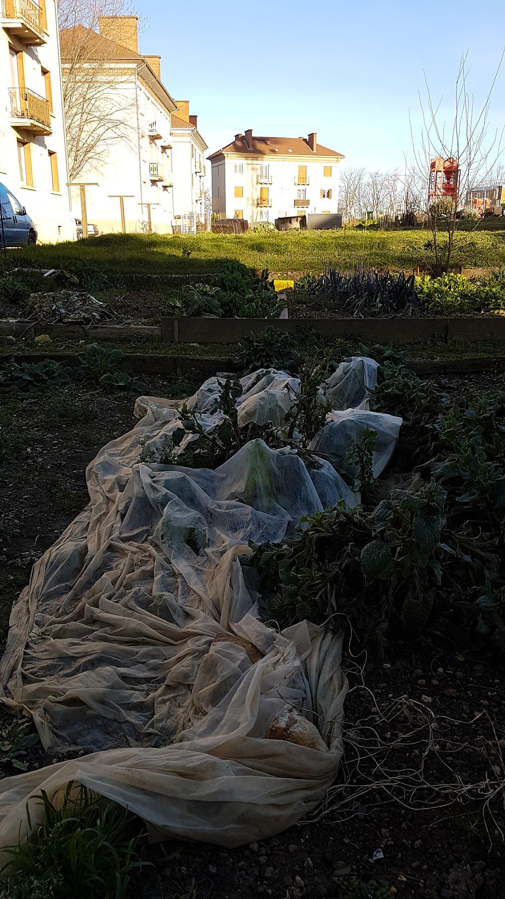 un long voile d'hivernage abandonné sur le sol d'un jardin préservé