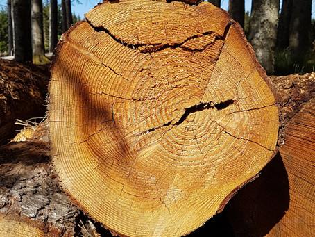 Petits et gros mensonges de la filière bois