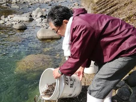 4月15日打波川方面岩魚放流