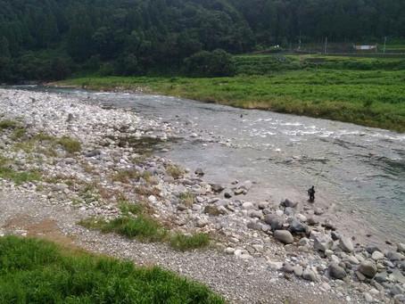 8月1日(土)九頭竜川の状況