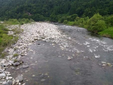 6月29日 九頭竜川 午前の様子