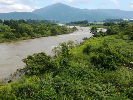 8月16日九頭竜川の現況