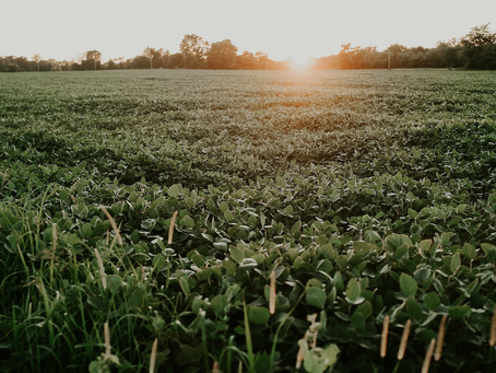 Is Your Next Innovation Growing in the Field Next Door?