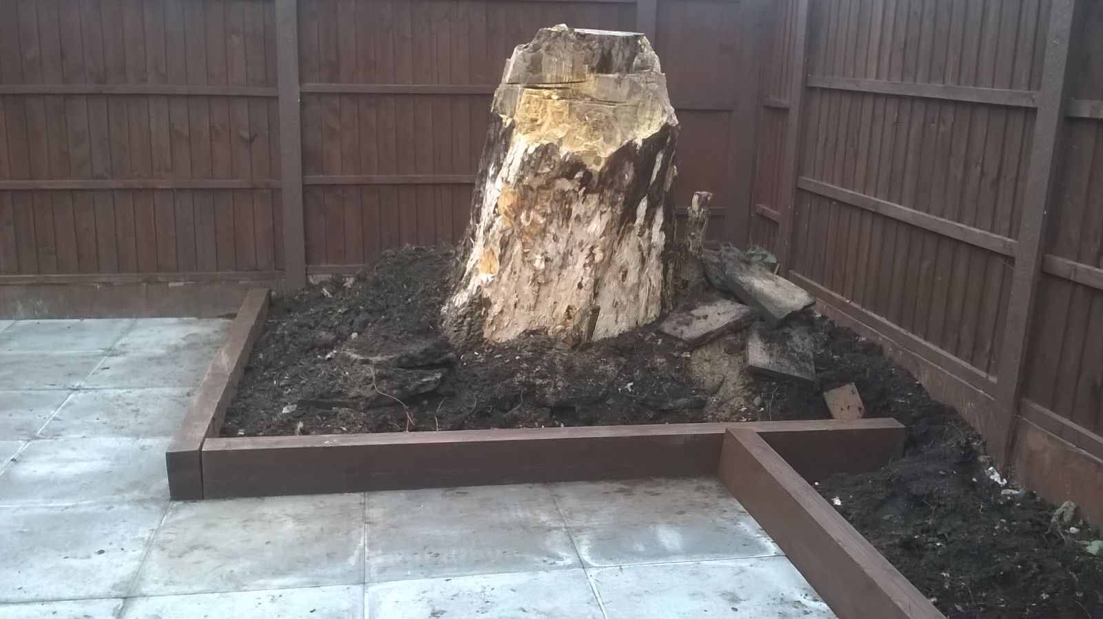 Old tree stump feature