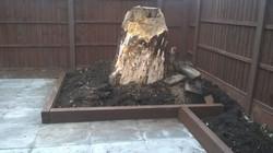 Old tree stump feature