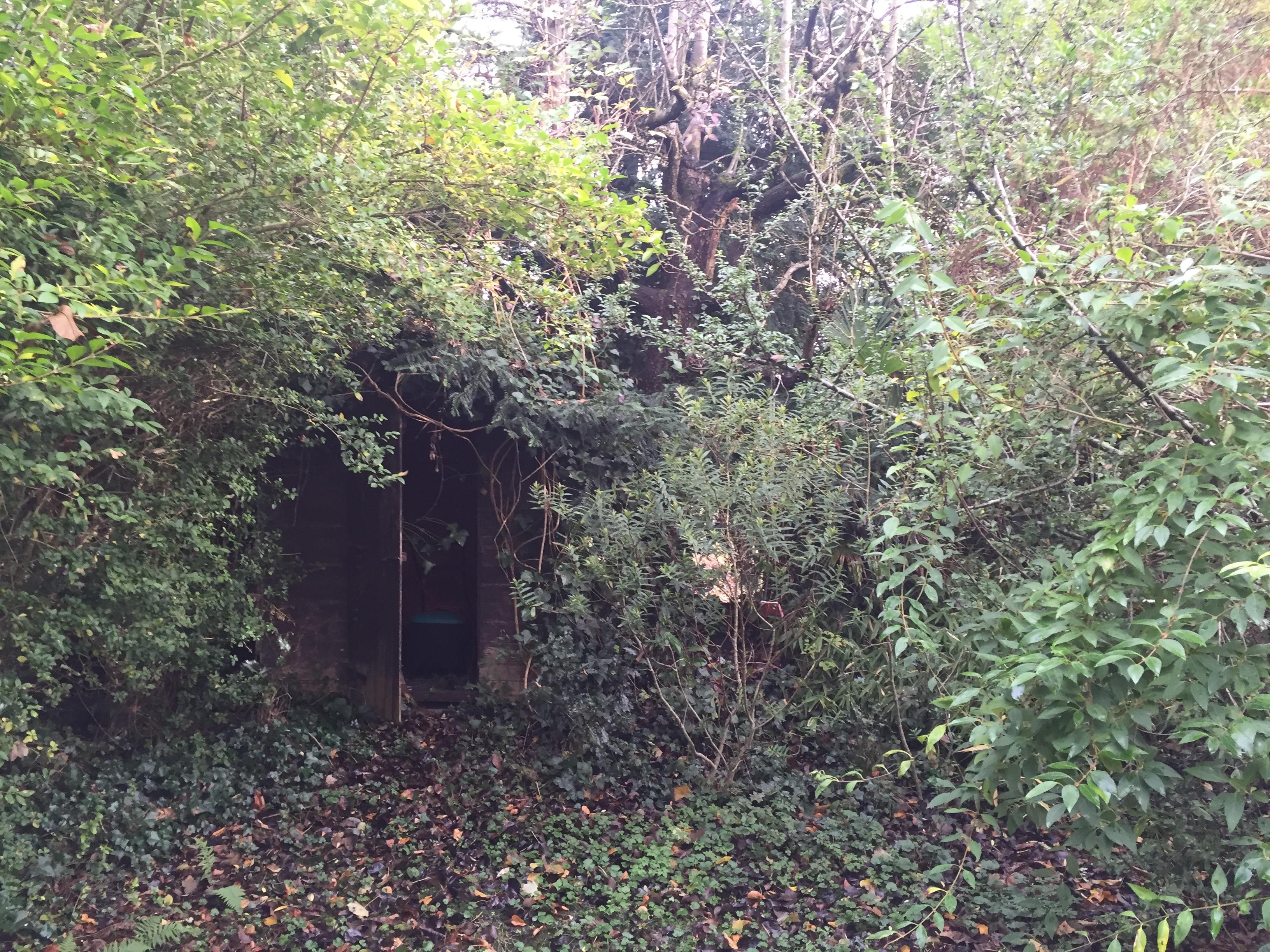 Overgown garden