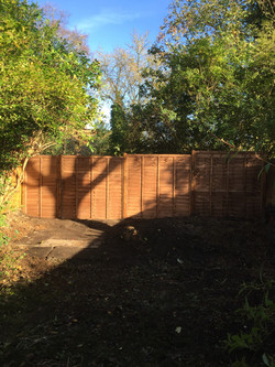 Trees and bushes cut down for fence