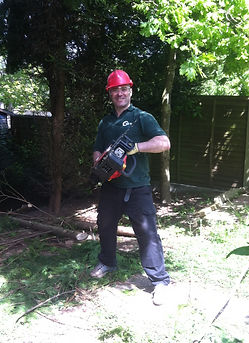 steve with the petrol chainsaw cutting down a large conifer in bartley green area