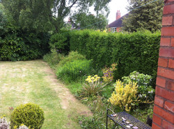 Overgrown garden to be maintained