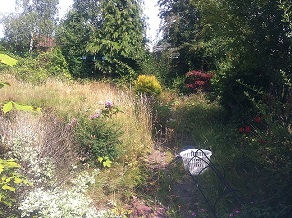 badly overgrown jungle back garden that needs attention in quinton